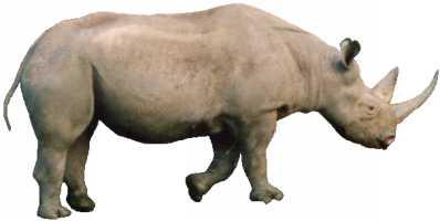 JavaScript犀牛图像